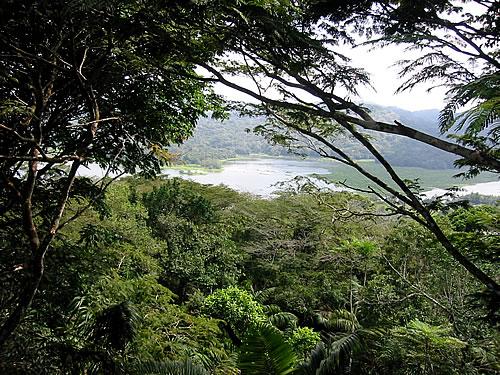 Grüne Bäume und tropisches Klima in Panama