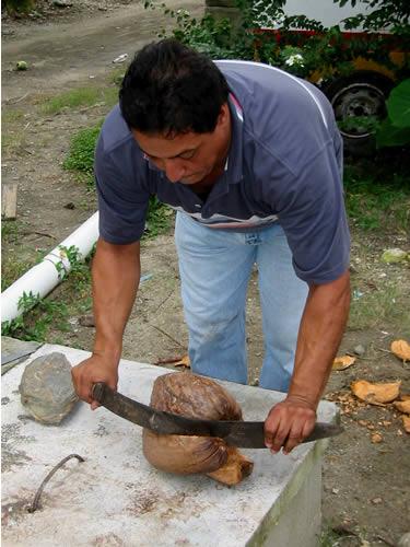 Unser Taxifahrer in Puerto Cortez macht uns eine Kokusnuss auf