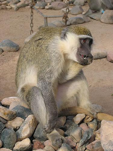 Sogar einen Zoo gibt es auf der Hotelanlage des Aladdin Beach Resort