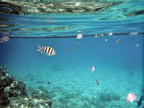 Und hinunter geht's in die Unterwasserwelt