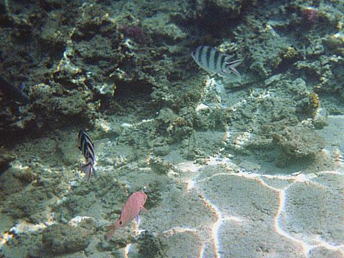 ... des Roten Meeres