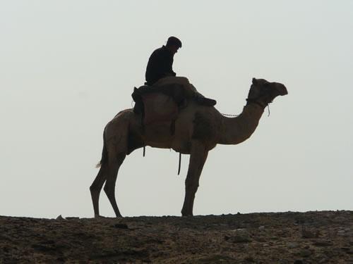 Ägyptischer Polizist auf seinem Kamel