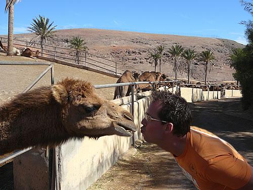 Im Oasis Park in La Lajita leben über 450 Kamele