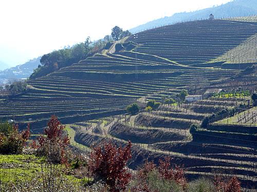 Weinanbau-Terrassen am Douro