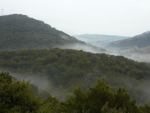 Nebel über den Korkeichenwäldern nahe Tempio Pausania