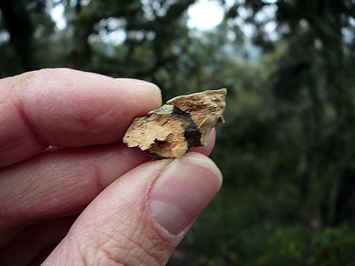 Ein Stück Kork von einer Korkeiche