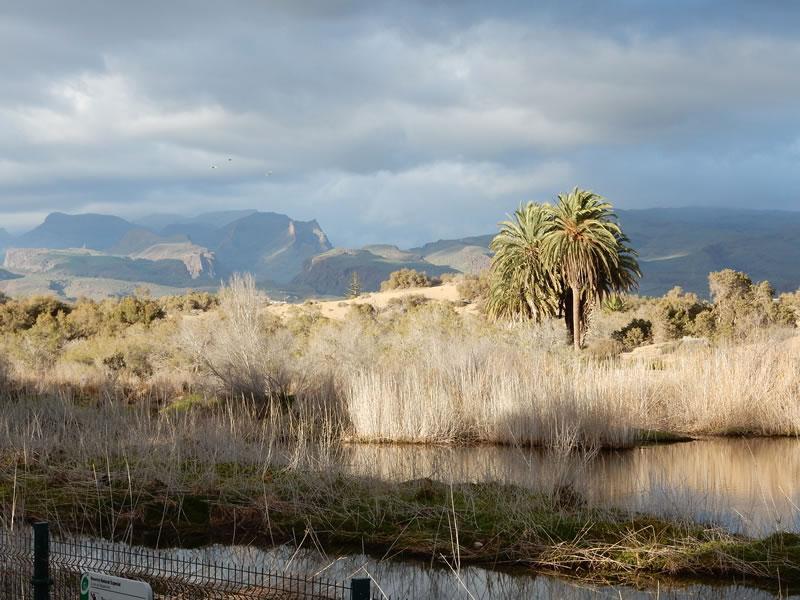 Vogelschutzgebiet in Maspalomas