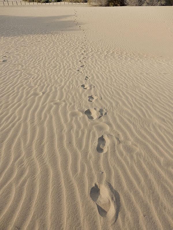 Der Sand in Maspalomas besteht aus zerriebenen Korallen- und Muschelkalk