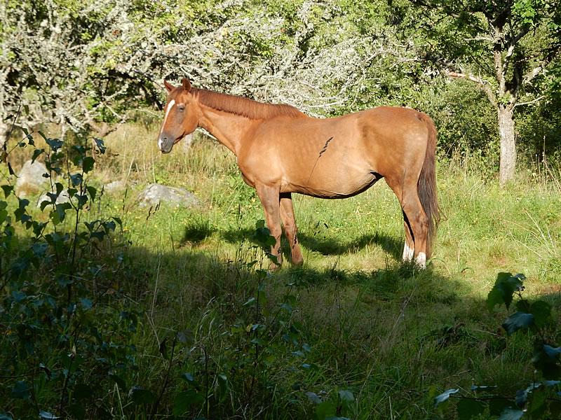 Pferd im Wald