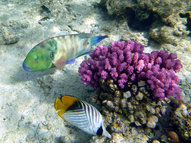 So einige Fische im Roten Meer können mit Recht stolz über ihre bunten Farben sein!