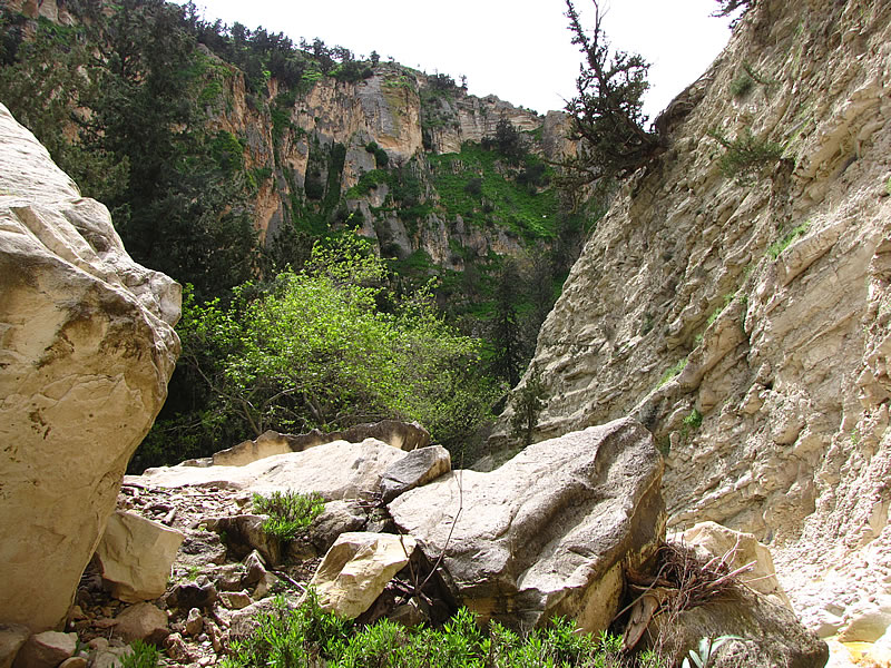 Die Felswände der Akamas-Schlucht sind über 30 Meter hoch